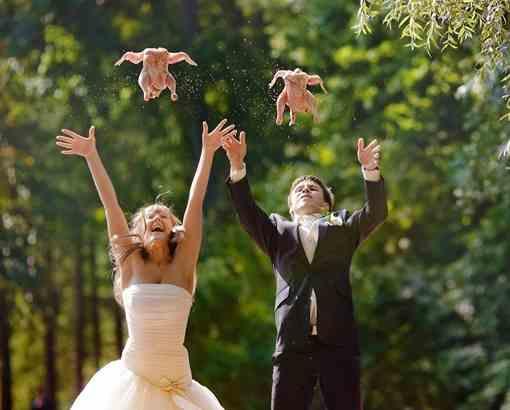 запускаем голубей