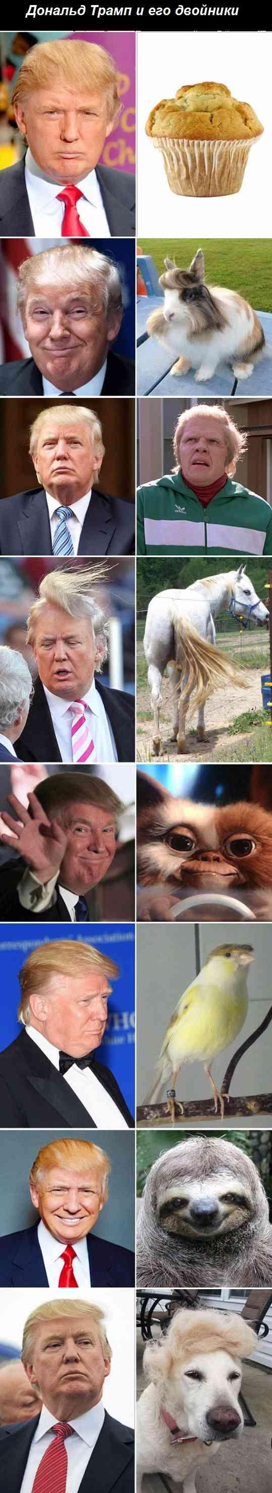 двойники Трампа