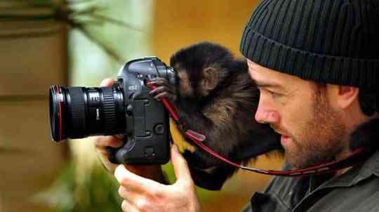 обезьяны в кадре