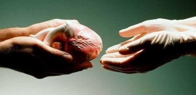 пересадка органов