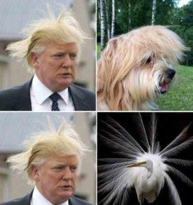 Трамп и его прическа