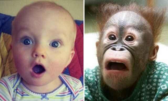 дети и животные эмоции