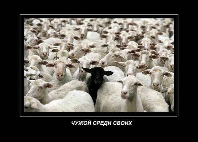 паршивая овца в стаде