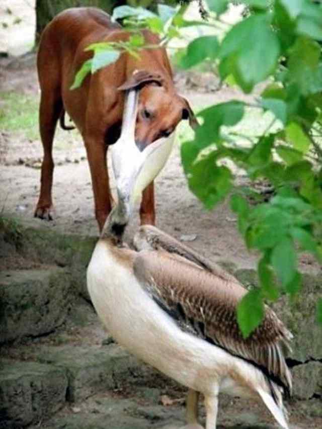 животные заботливые