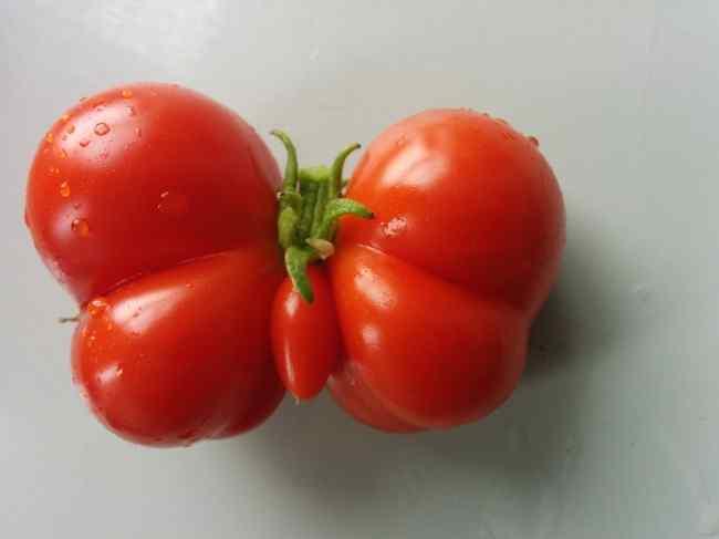 необычные формы овощей