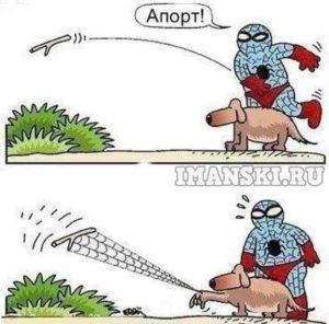 чп апорт