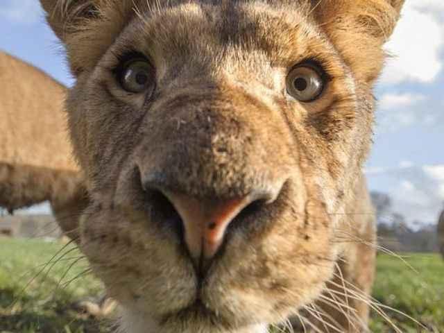 любопытные животные
