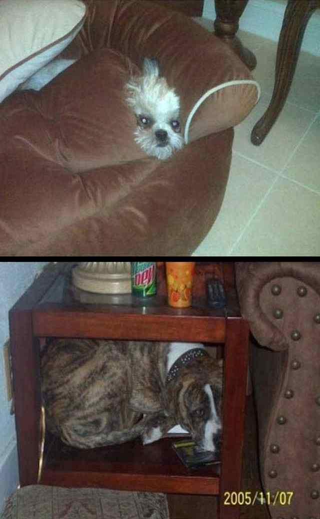 животные прячутся