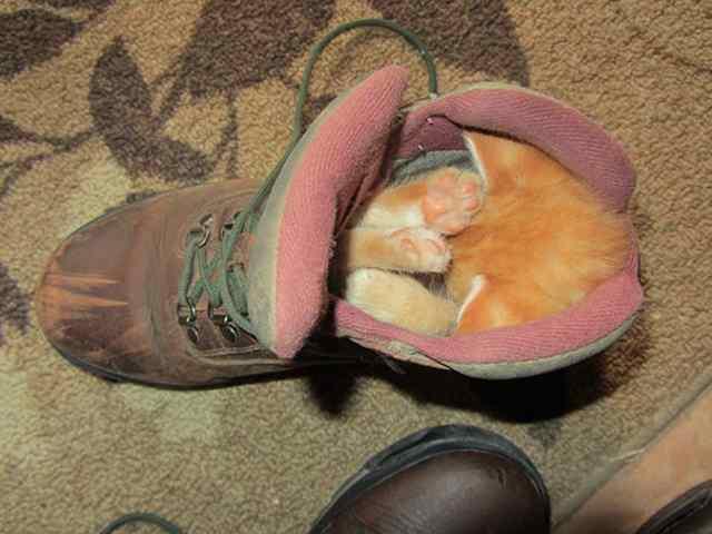малыш в ботинке