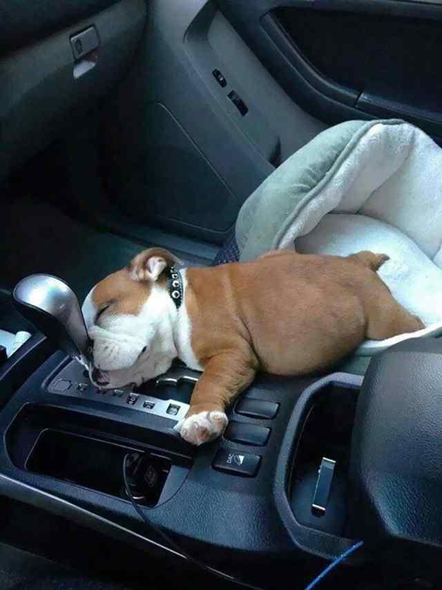 животные уснули