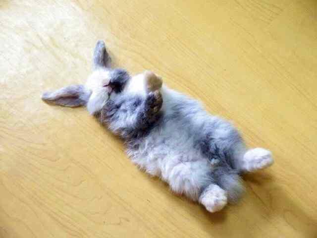 кролик уснул на полу