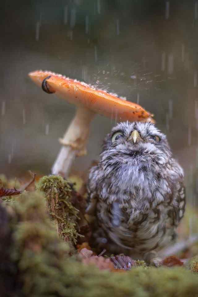дождь и животные