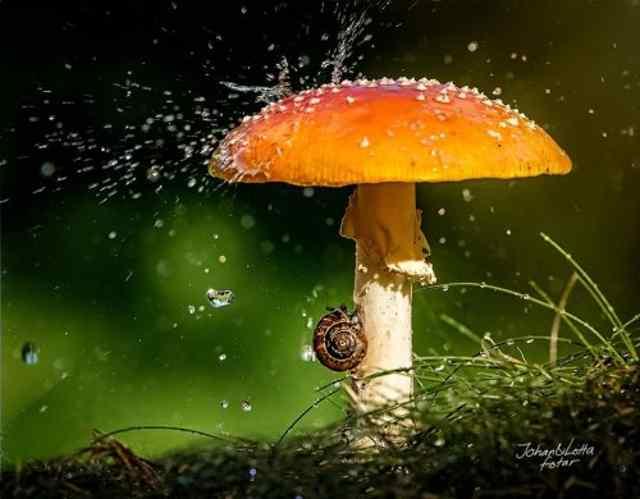 дождик (13)