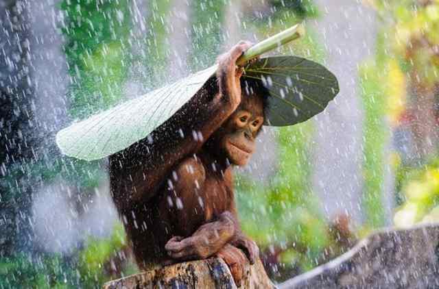 животные под зонтом