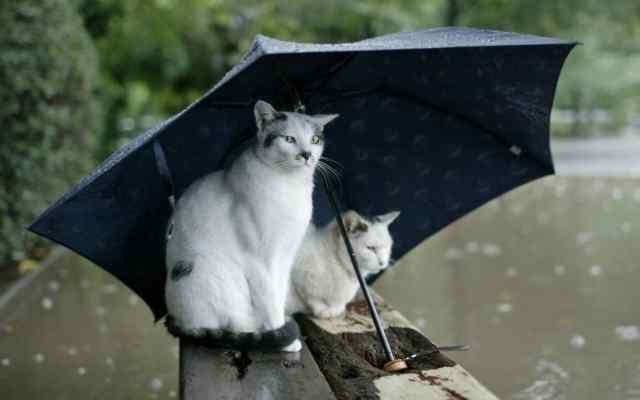 кошки и дождь