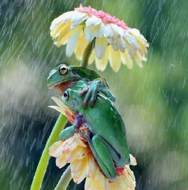 дождик (8)