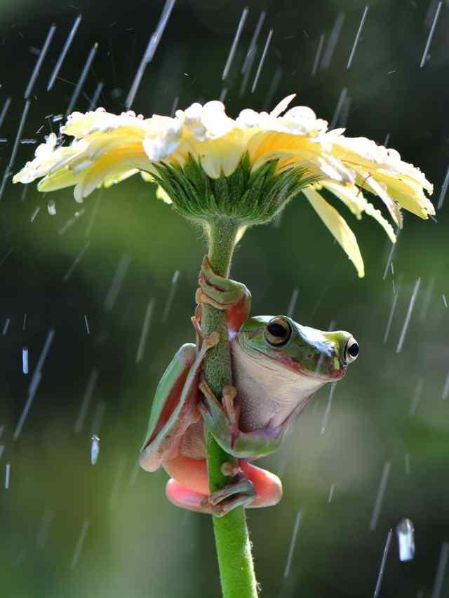 животные под дожем