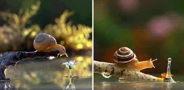 трогательные фото природы