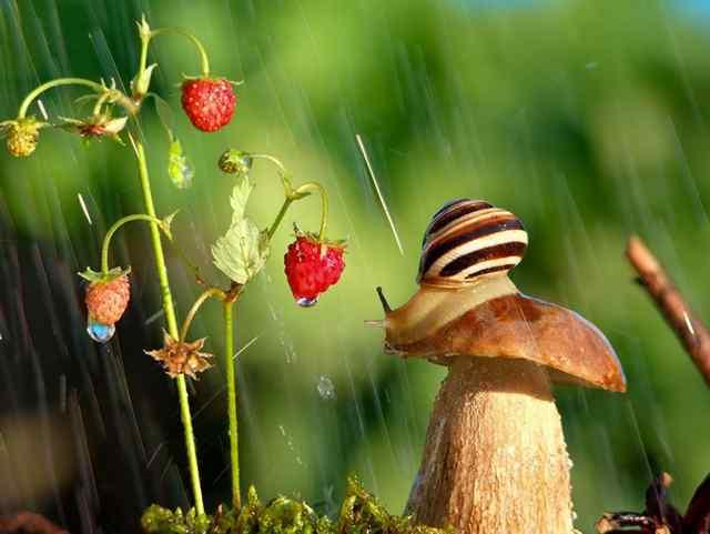 милые фото природы