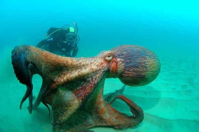 гиганские жители морей