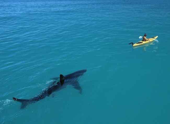 акула напала
