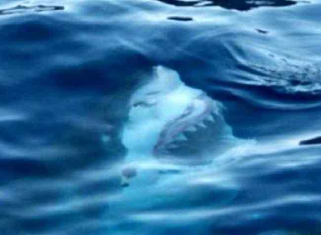 страшные фото с акулами