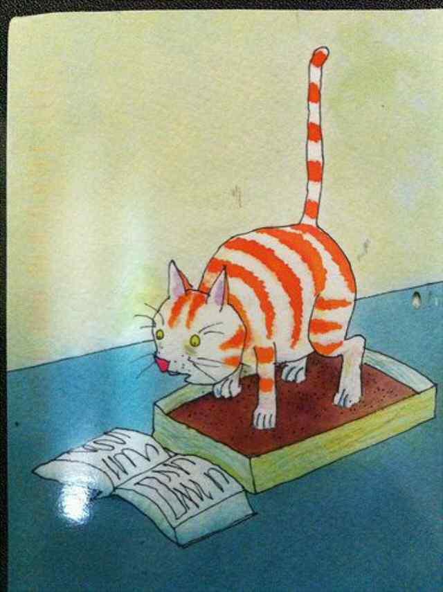 кот туалет лоток