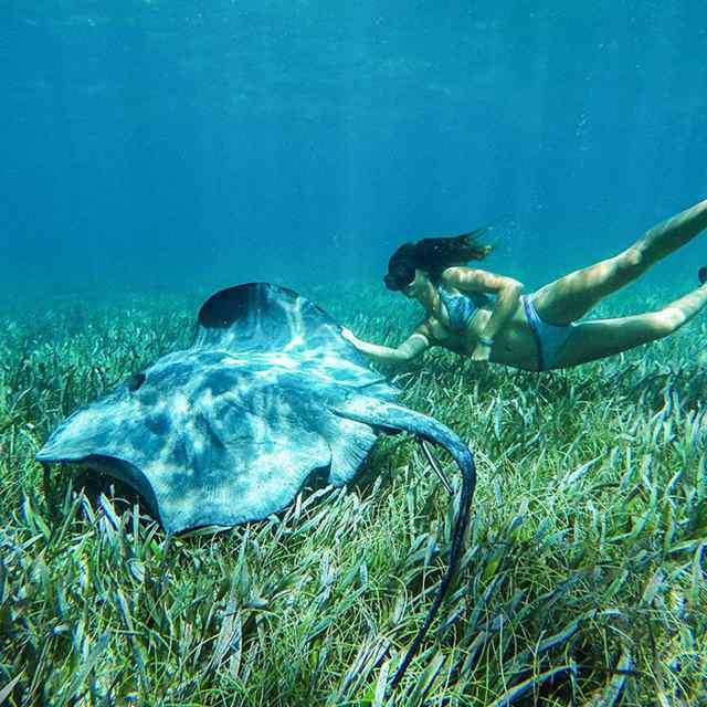 подводный дайвинг фото