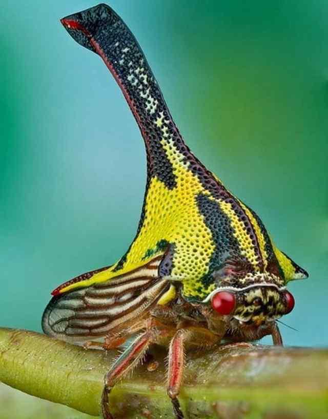 странные насекомые