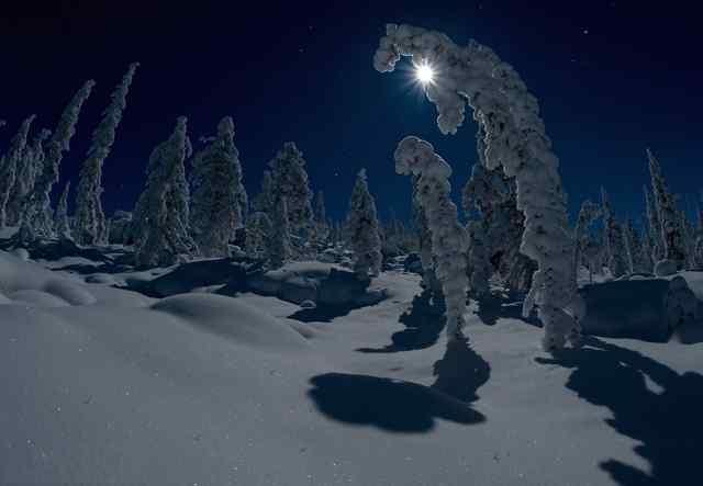 морозные ночи
