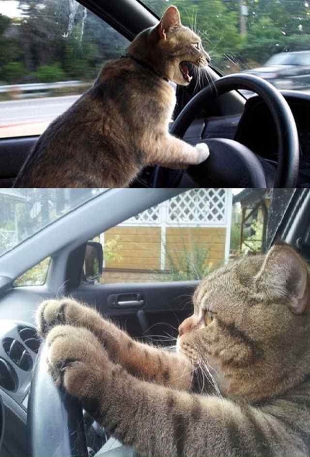 коты рулят