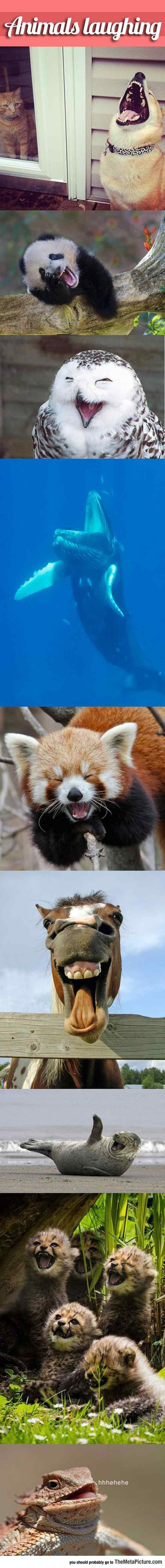 звери смеются