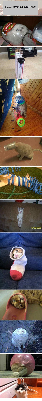 коты, которые застряли