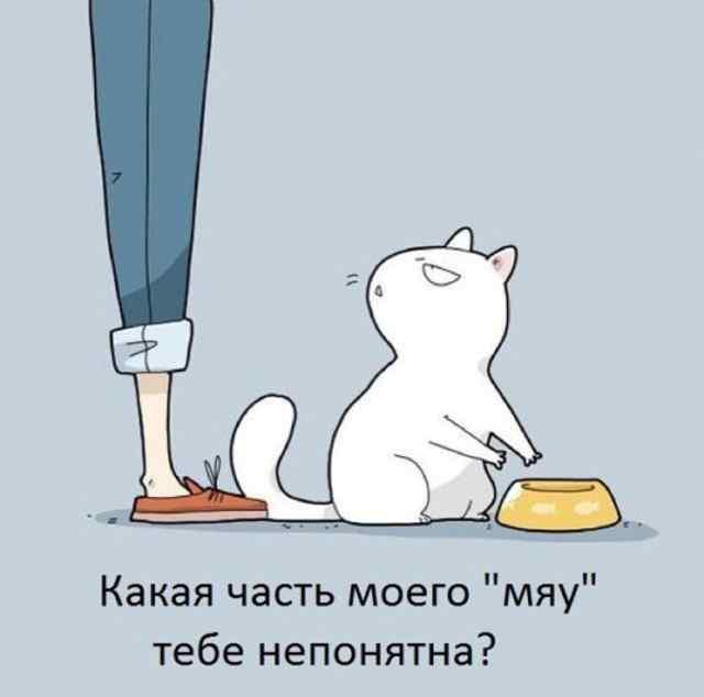 Карикатуры про котов и кошек.