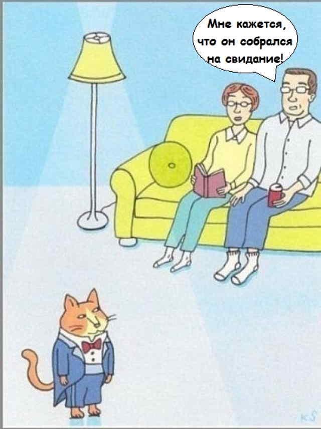 Подборка карикатур про котов и кошек.