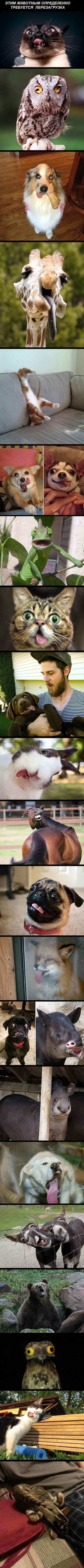смешные странные животные фото