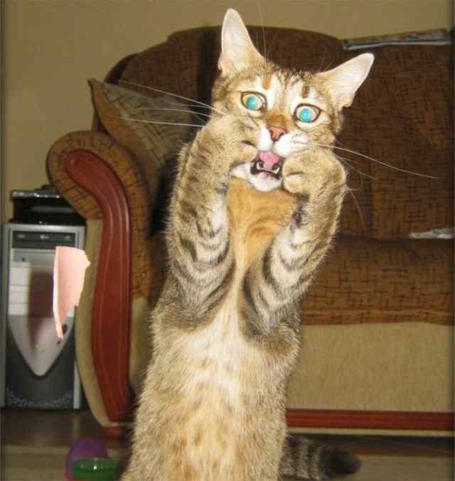 Усатый-полосатый Оскар . Подборка смешных котов.