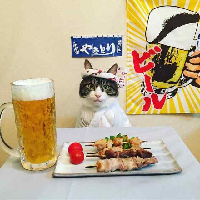 Кот-косплей Маро и японская кухня.
