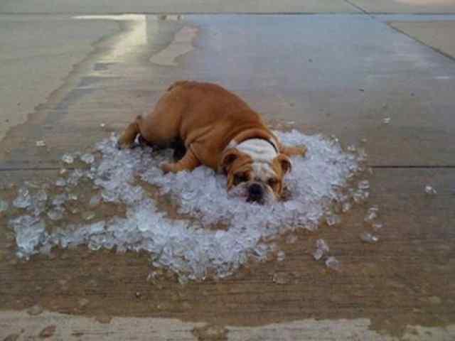 Жарко, очень жарко.
