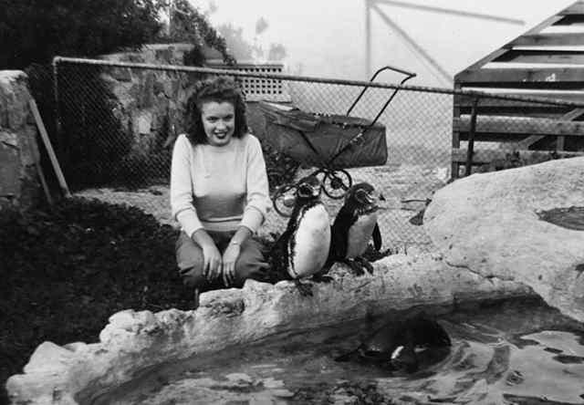 Молодая норма Джин Мортенсон играет с пингвинами в зоопарке (1941)