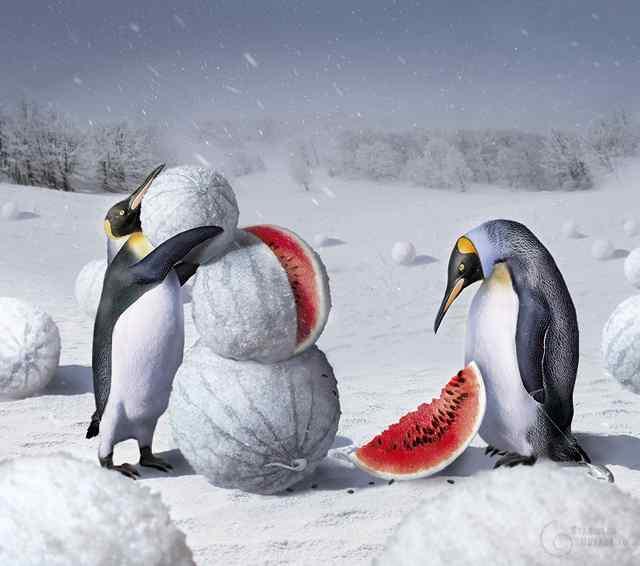Подборка карикатур про пингвинов.
